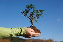 """В нашей школе прошла экологическая акция """"Посади свое дерево"""""""