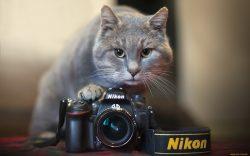 Прими участие со своим хвостатым другом в школьном фотоконкурсе!